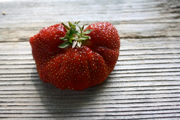 A lovely Michigan strawberry.